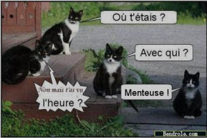 chat-attente-maitre-photos-droles-1344877449