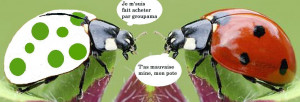 groupacocc