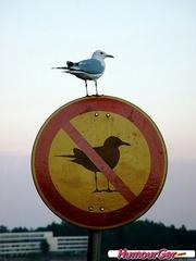 Humour_panneau_oiseau.thumb